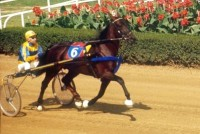 AMERICAN HORSE & HORSEMAN Vol. IV w/ Lengthy SUPER BOWL Segment