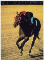 BUCKPASSER 8-RACE TIME CAPSULE