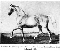 GREAT AMERICAN TROTTERS