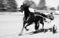 HARNESS RACING MUSEUM and HALL OF FAME: THE BEST HARNESS RACES OF 2001