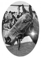 ARKLE: PORTRAIT OF A LEGEND