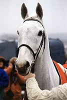 DESERT ORCHID: THE VIDEO
