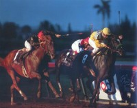 1989 BREEDERS' CUP (Entire Televised Broadcast from GULFSTREAM PARK)