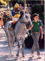 1986 BREEDERS' CUP (Entire Televised Broadcast from SANTA ANITA PARK  / Commercial MID-LENGTH Version)