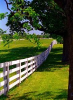 BEYOND THE STONE FENCES: HORSE FARMS OF THE BLUE GRASS