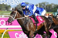 WINX BREAKS TWO RACING RECORDS (2018 George Ryder Stakes & 2018 Queen Elizabeth Stakes - Entire Televised Broadcasts)